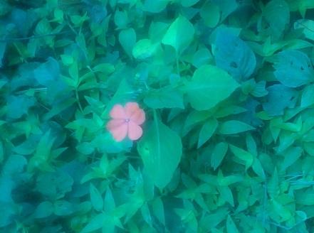 jungle-beauty.jpg