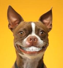 fake smile dog